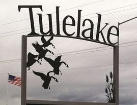Tule Lake Geese